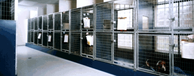 Clean AND Quiet Kennel