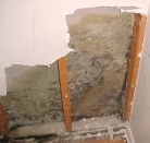 Mold in wall cavity