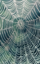 Is your air filter any more effective than a spider's web?